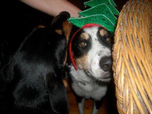 Christmashead Murphy
